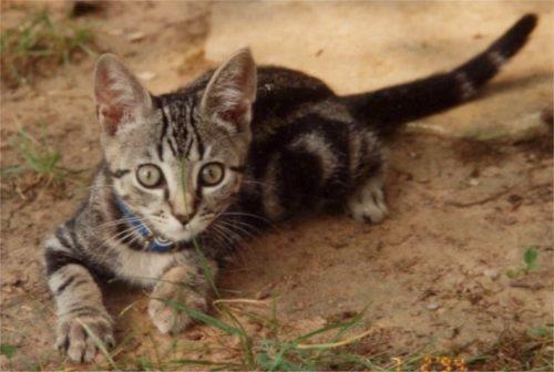 RIP Target: 21 years as a faithful feline friend