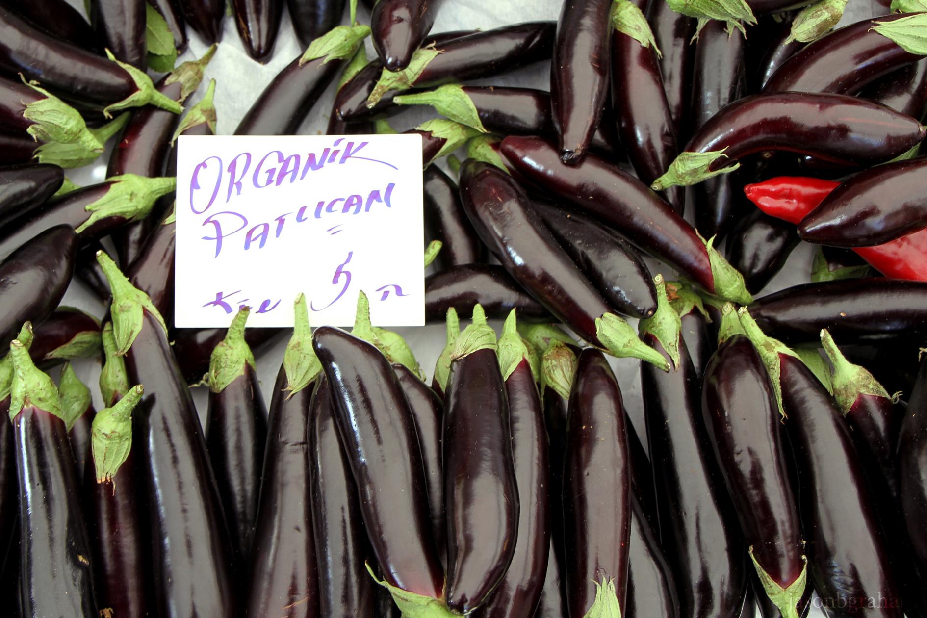 eggplant-3746