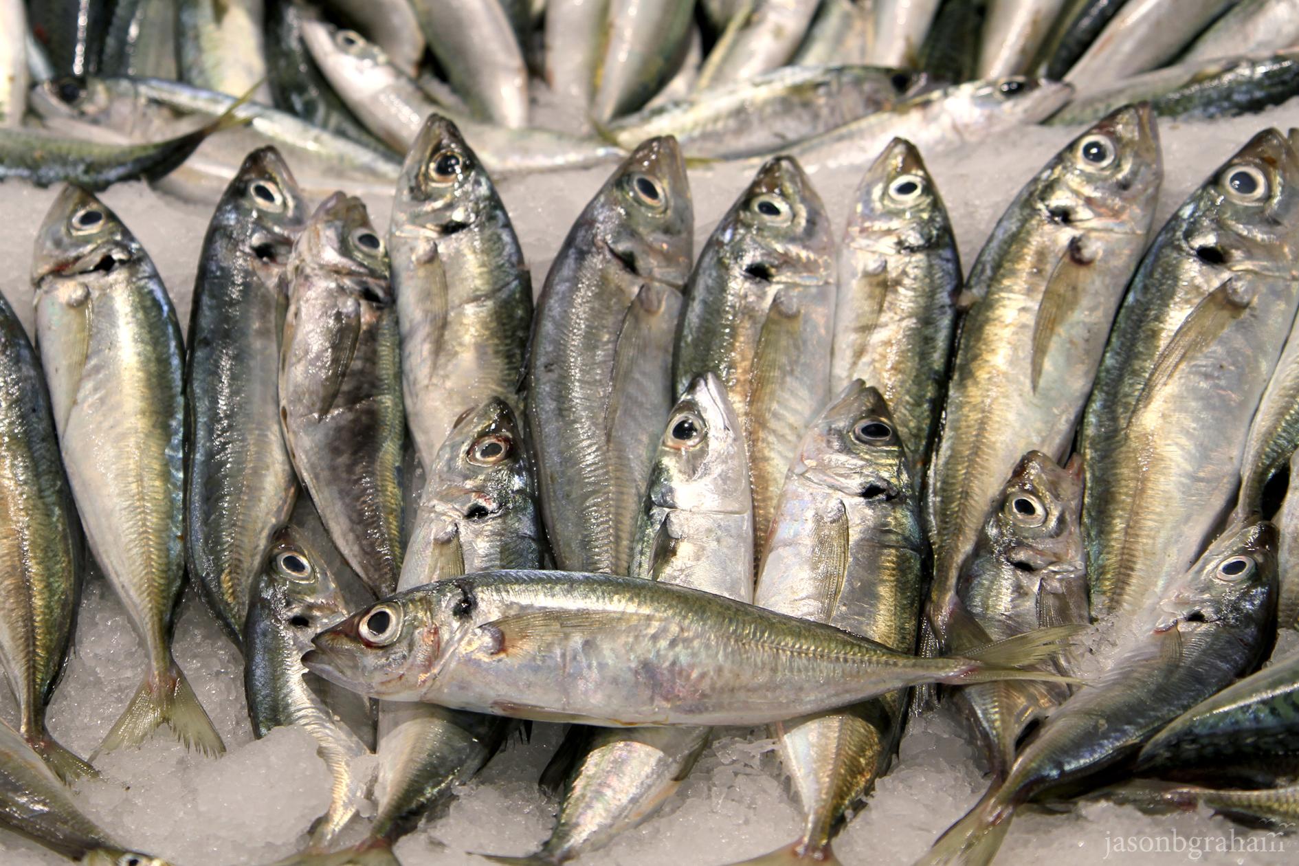 fish-4380