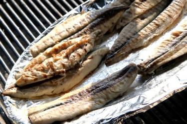 fish-4577