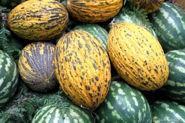 melon-2185