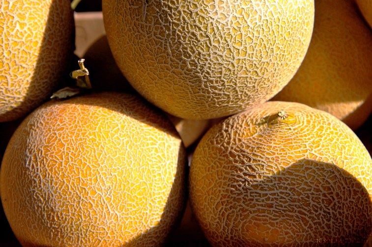 melon-9602