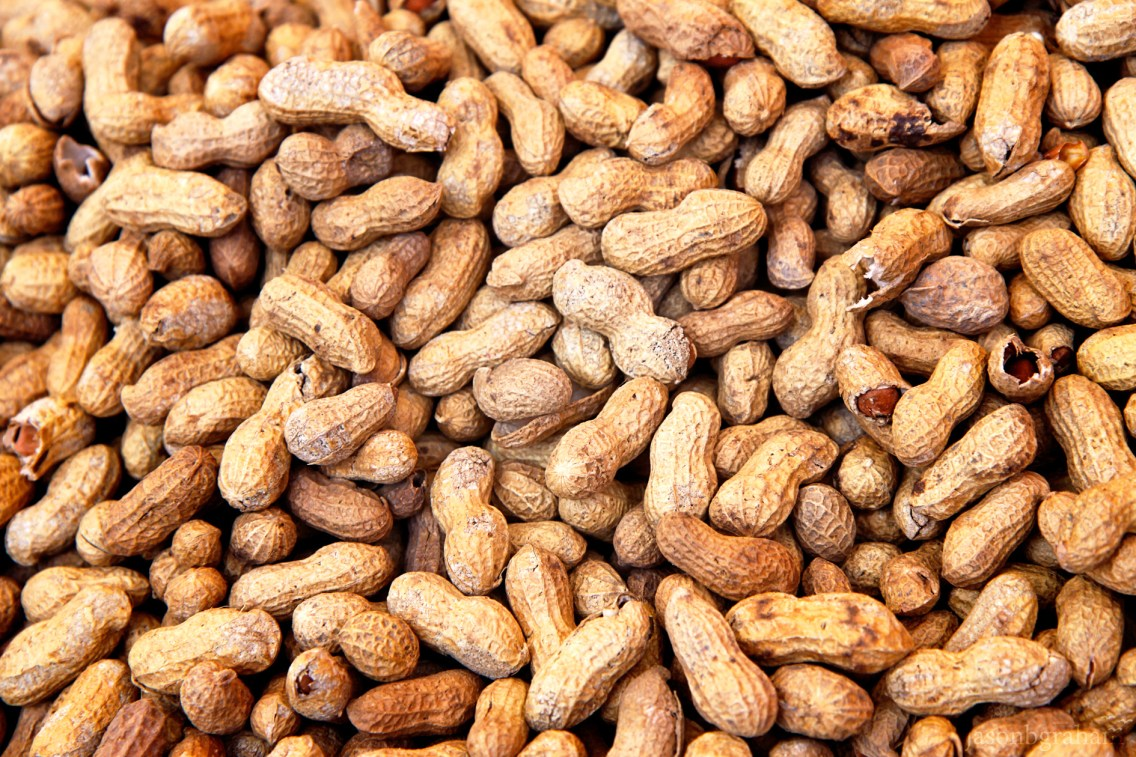 peanuts-9691