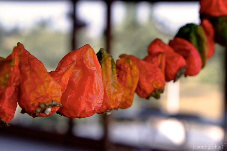 peppers-2286