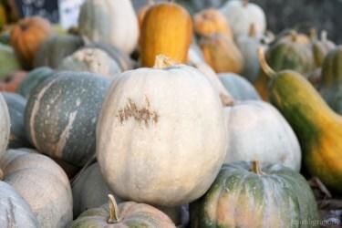 pumpkin-2007