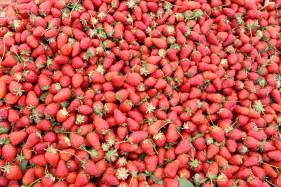 strawberries-3738