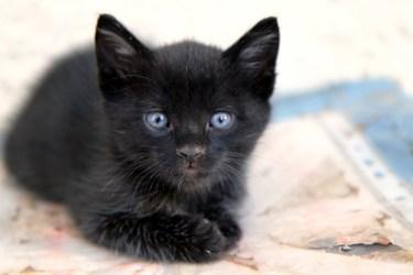 street-cat-4420