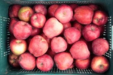 jason-b-graham-apple-elma-0003