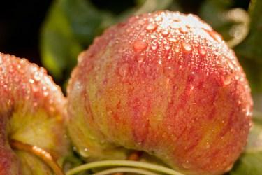 jason-b-graham-apple-elma-0010