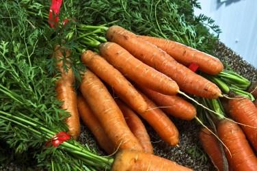 jason-b-graham-carrot-havuc-0003