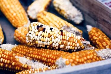 jason-b-graham-corn-misir-0005