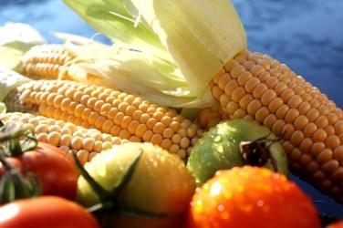 jason-b-graham-corn-misir-0008
