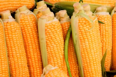 jason-b-graham-corn-misir-0011