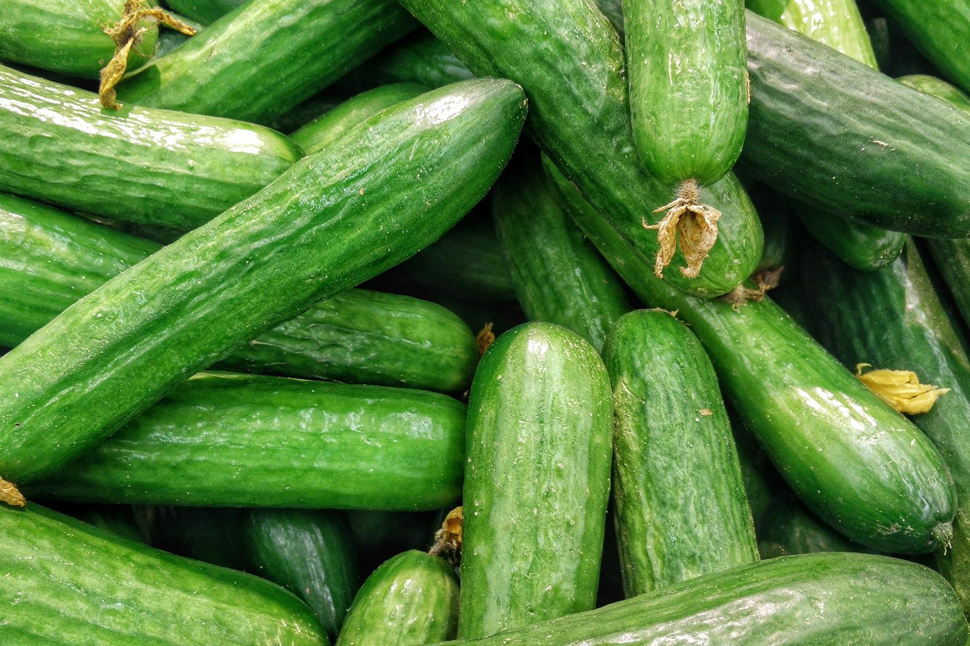 jason-b-graham-cucumber-salatalik-0001