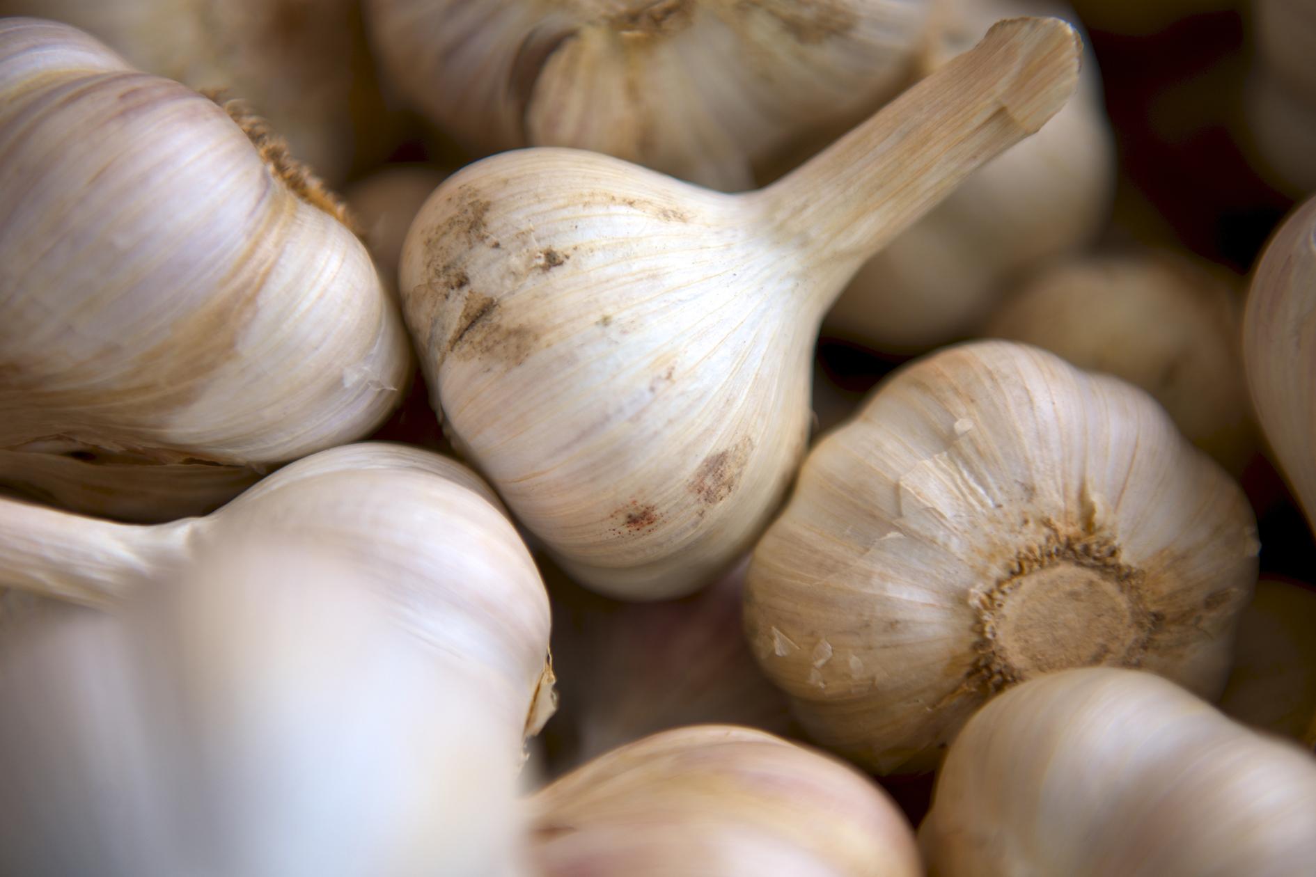 jason-b-graham-garlic-sarimsak-0004