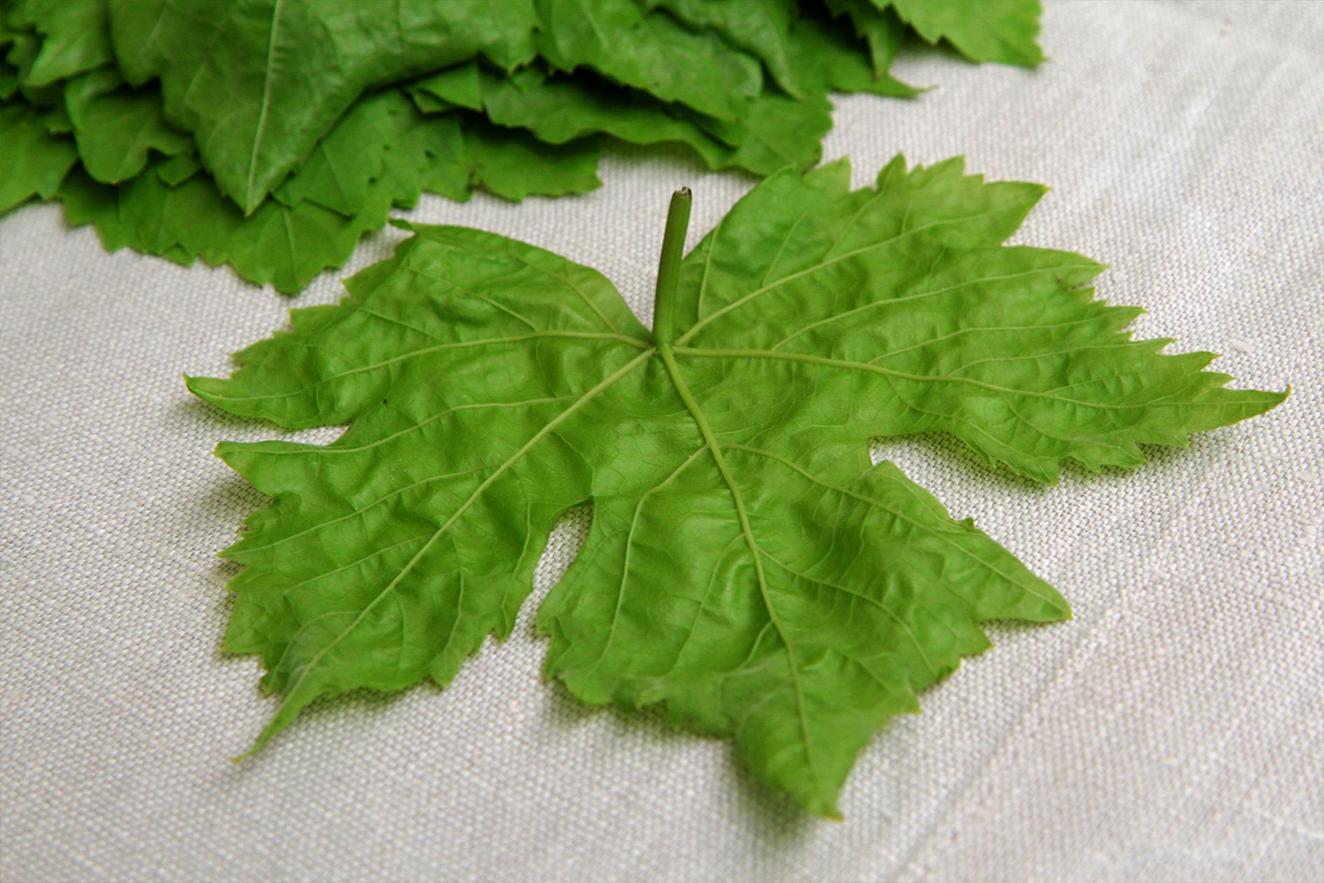 jason-b-graham-grapes-uzum-0014