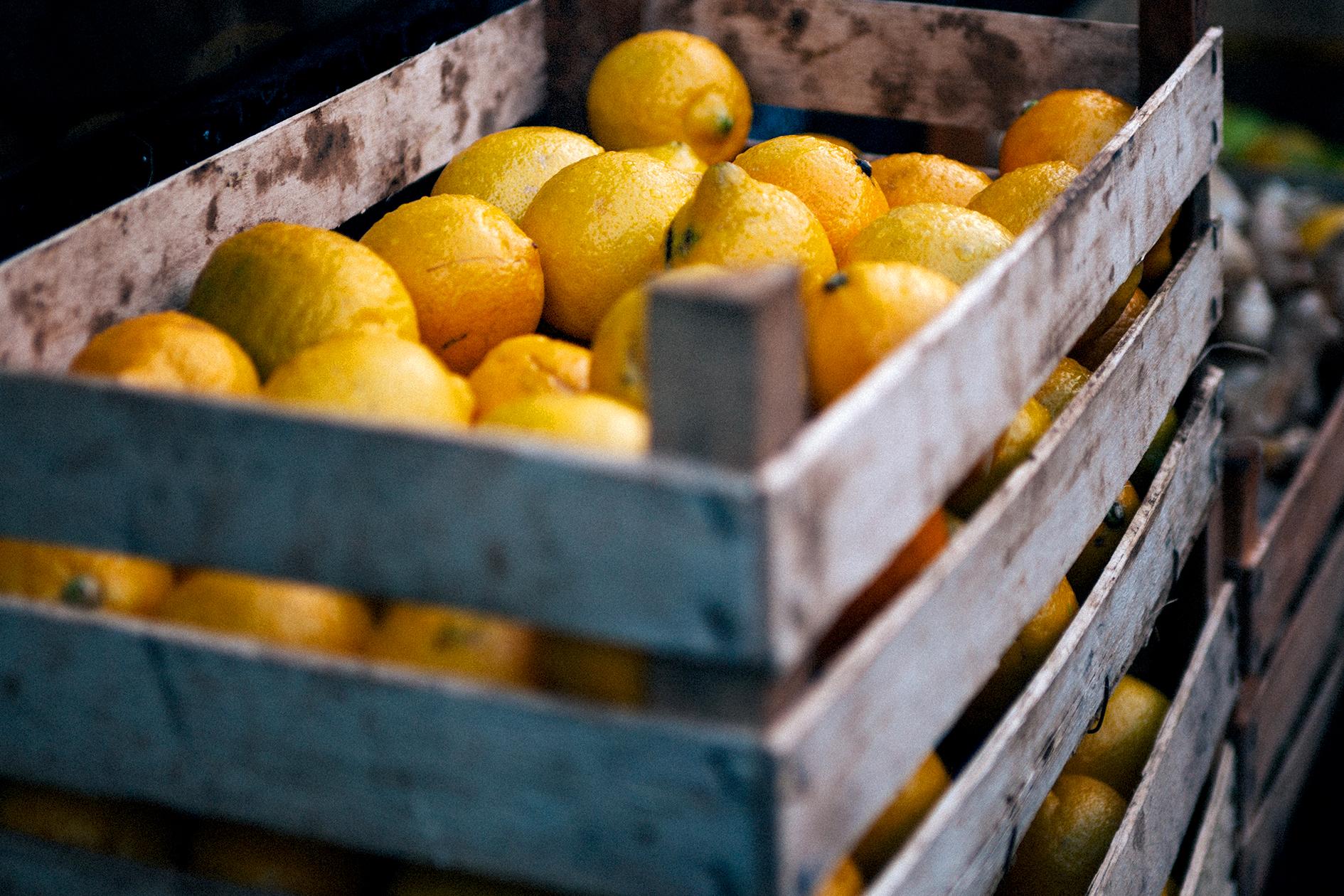 jason-b-graham-lemon-limon-0002