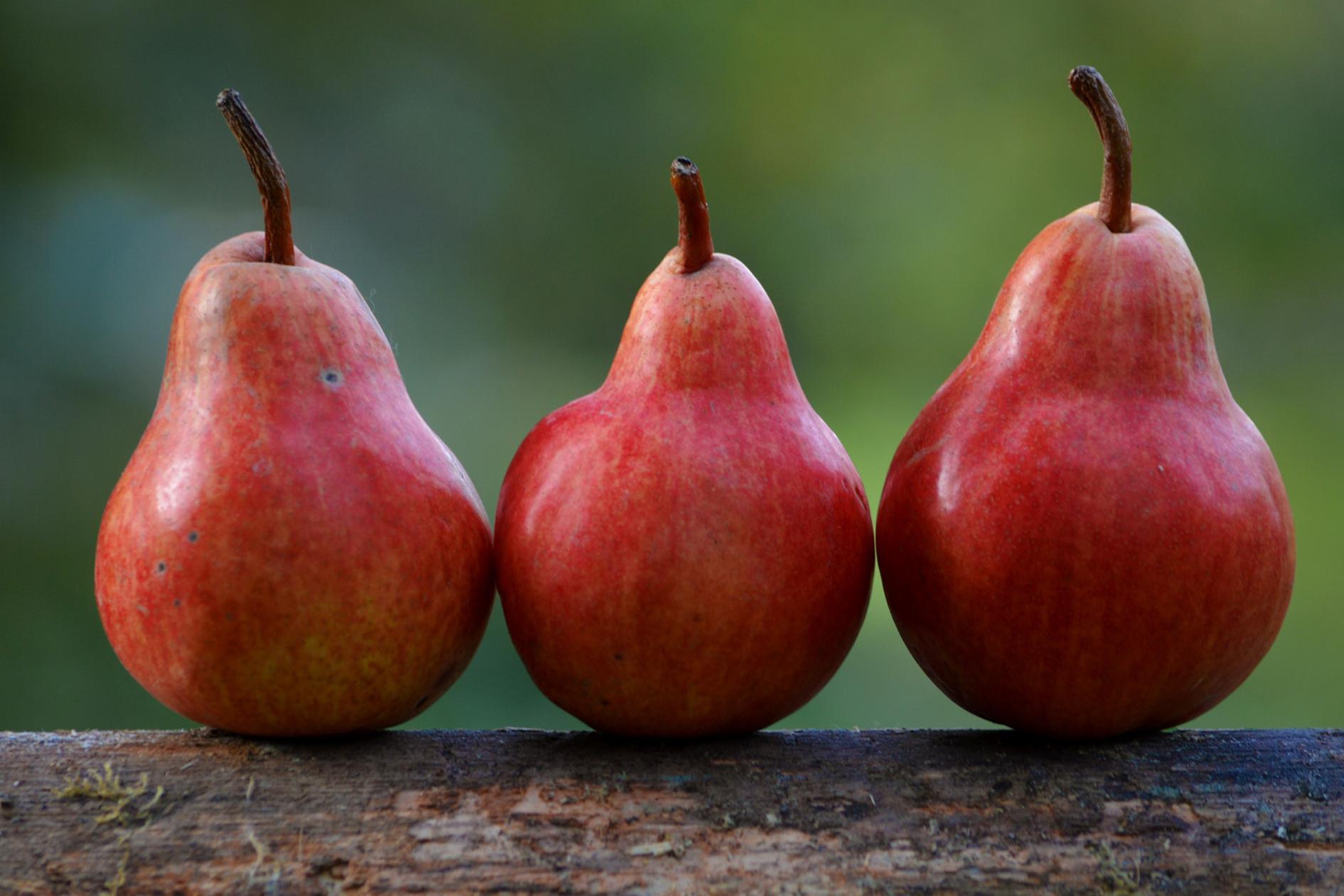 jason-b-graham-pear-armut-0005