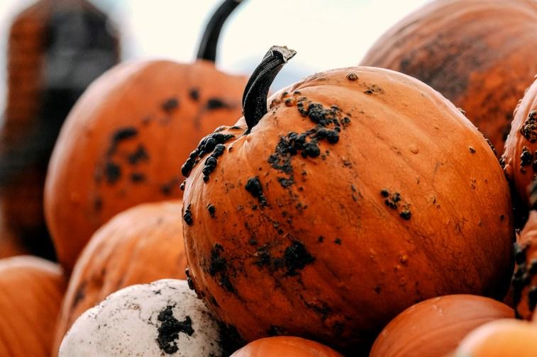 jason-b-graham-produce-pumpkin-kabak-0003