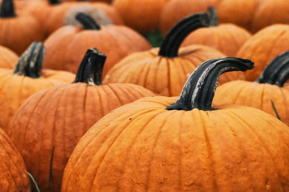 jason-b-graham-produce-pumpkin-kabak-0004