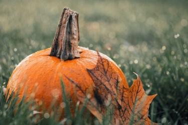jason-b-graham-produce-pumpkin-kabak-0005