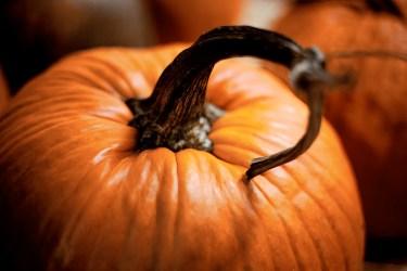jason-b-graham-produce-pumpkin-kabak-0007