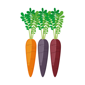 carrot-colors-icon