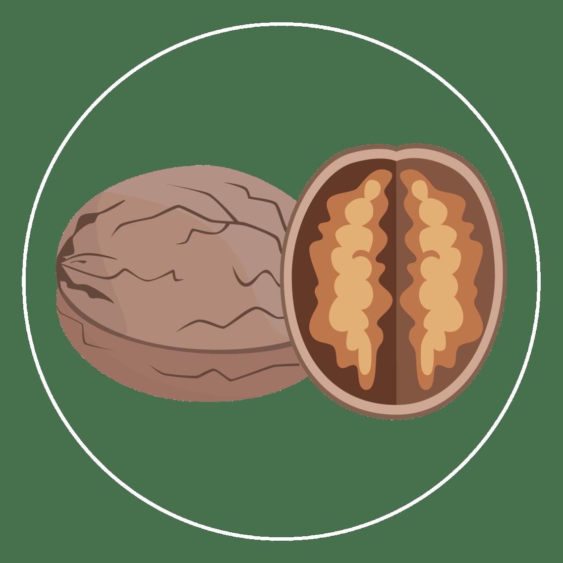 walnut-icon