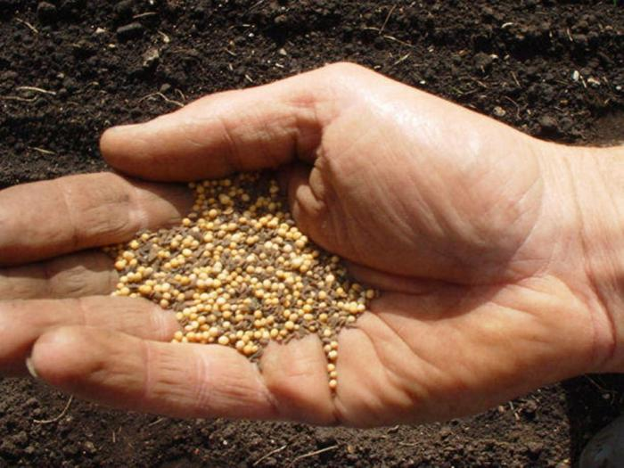 Planting Seeds for The Gospel