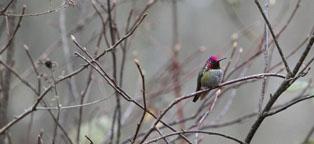 Hummingbird photo by Derek Scott.