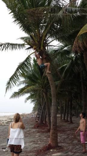 Aaron Gets a Coconut