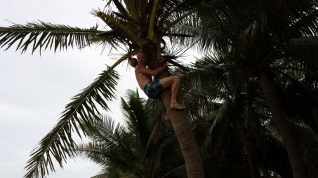 Aaron Climbs a Tree