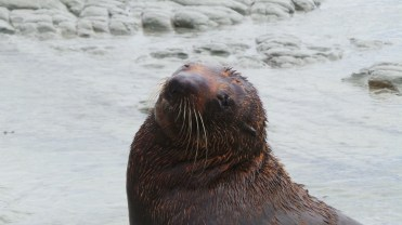 Seal Sun Relaxing