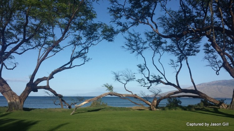Ocean Views (1)
