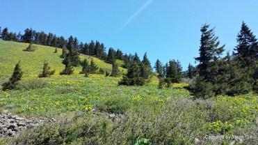 Dog Mountain Views (4)