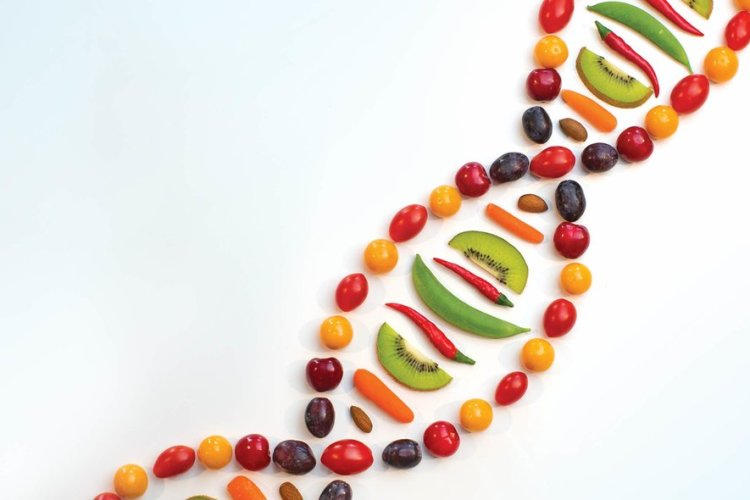 Food and DNA
