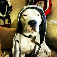 Call Him Snoop Dozer