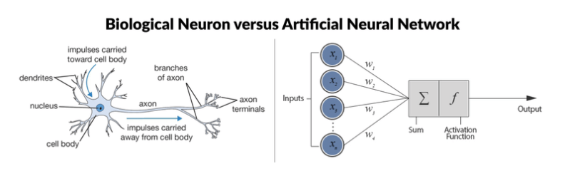 biologicalVsArtificialNeuron