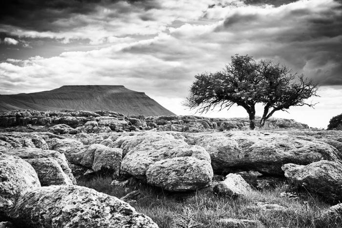 Ingleborough and elder