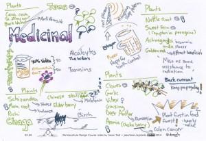 Week 2 - Medicinal plants