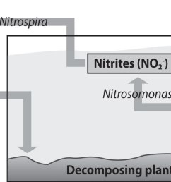 in my research it seems that the most important part of any aquaponics system is the bacteria that converts the fish waste into beneficial nutrients  [ 1473 x 573 Pixel ]