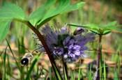 Pollenator
