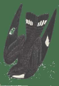 NighthawkLogo