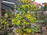 anh Tet Nham Thin Hue 012
