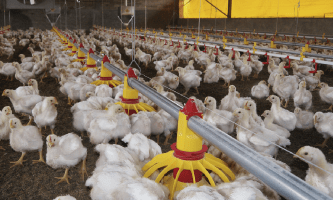 The continuous innovation of systems for poultry production: a key point to improve profits