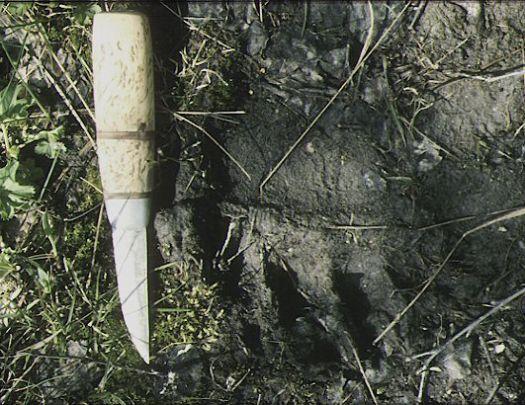 Kniv vid björnspår