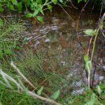 Modersvatten