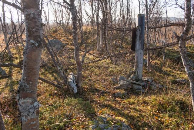 Stolpen till Pirkit Ammas njalla står kavar på en kullle i björkskogen