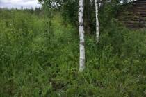 Lada mer träd