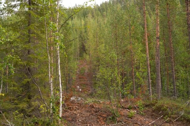 Spår av skogsmaskin upp på ett berg